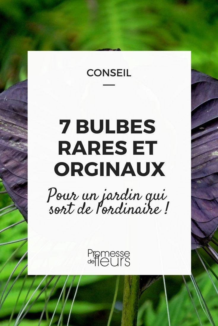 7 bulbes rares et originaux