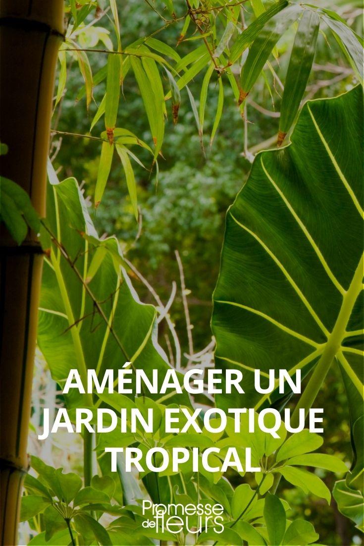 jardin exotique : comment l'aménager ?