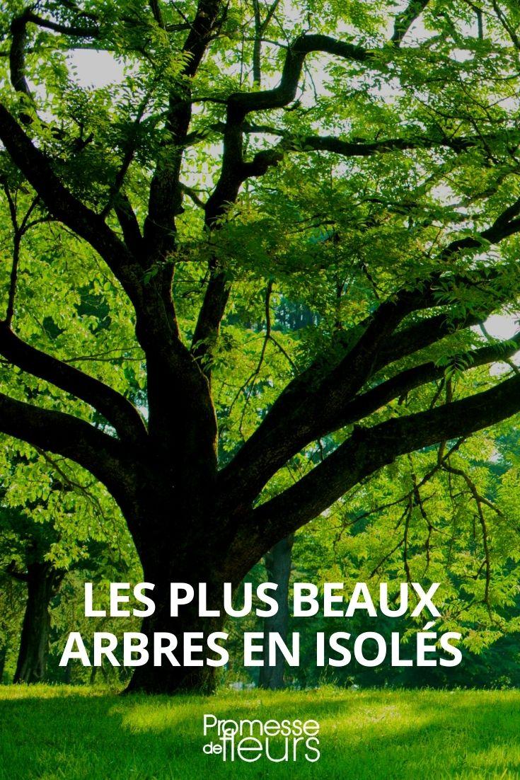 les plus beaux arbres en isolé