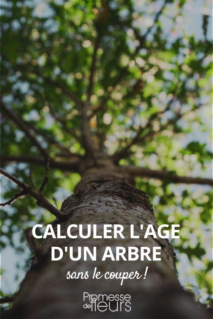 calculer l'age d'un arbre sans le couper