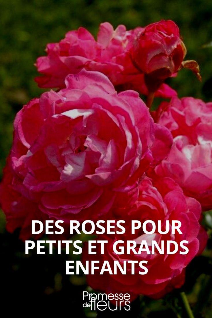 rosiers avec noms de personnages disney