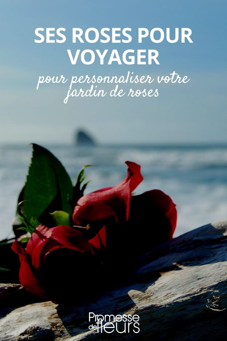 roses voyage