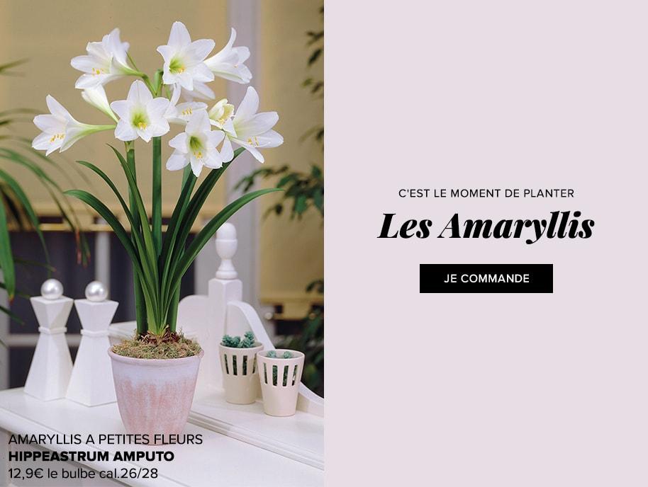 Promesse de fleurs plantes pour le jardin vivaces for Amaryllis graine