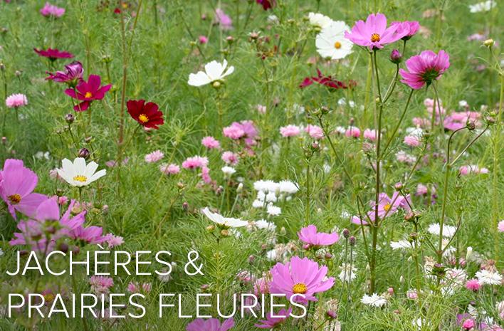 plantes annuelles. Black Bedroom Furniture Sets. Home Design Ideas