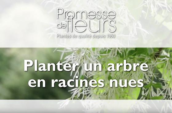 planter arbuste racines nues