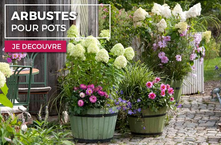 pot pour arbuste fleurs en pot u conseils et ides pour. Black Bedroom Furniture Sets. Home Design Ideas