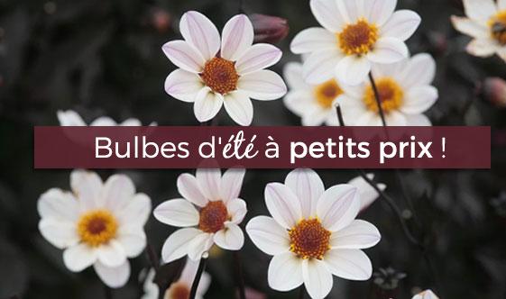 bulbes-ete