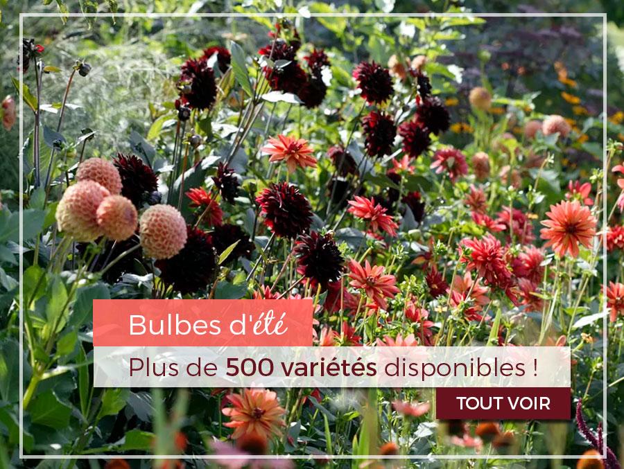 Promesse de fleurs plantes pour le jardin vivaces for Plantes par internet