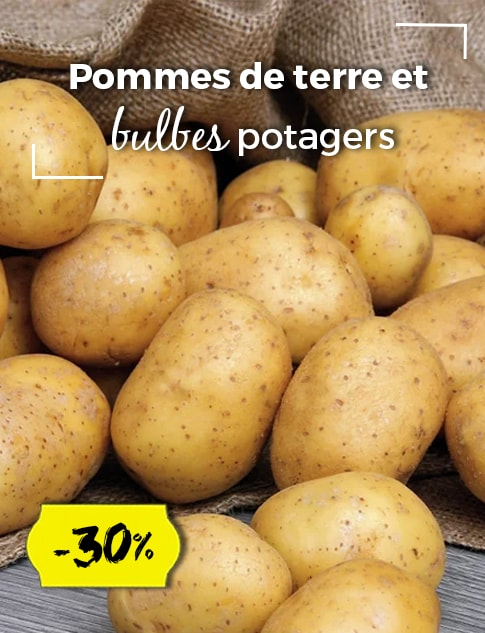 potagers-bulbes