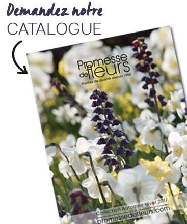 Promesse de fleurs plantes pour le jardin vivaces for Catalogue plantes et arbustes