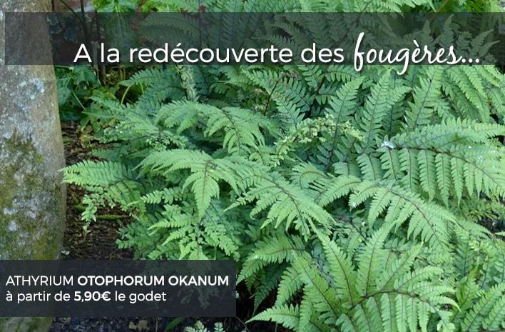 Plantes vivaces pour le jardin vivaces couvre sol for Plante verte vivace exterieur