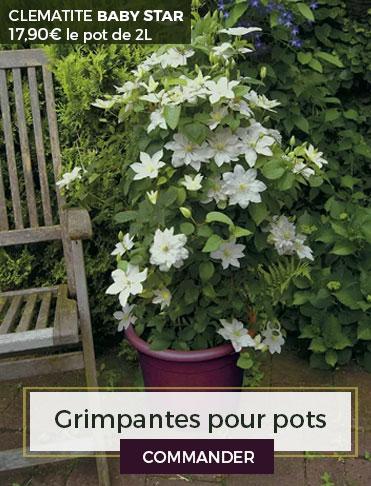 plante grimpante cl matite et rosier grimpant pour votre jardin. Black Bedroom Furniture Sets. Home Design Ideas