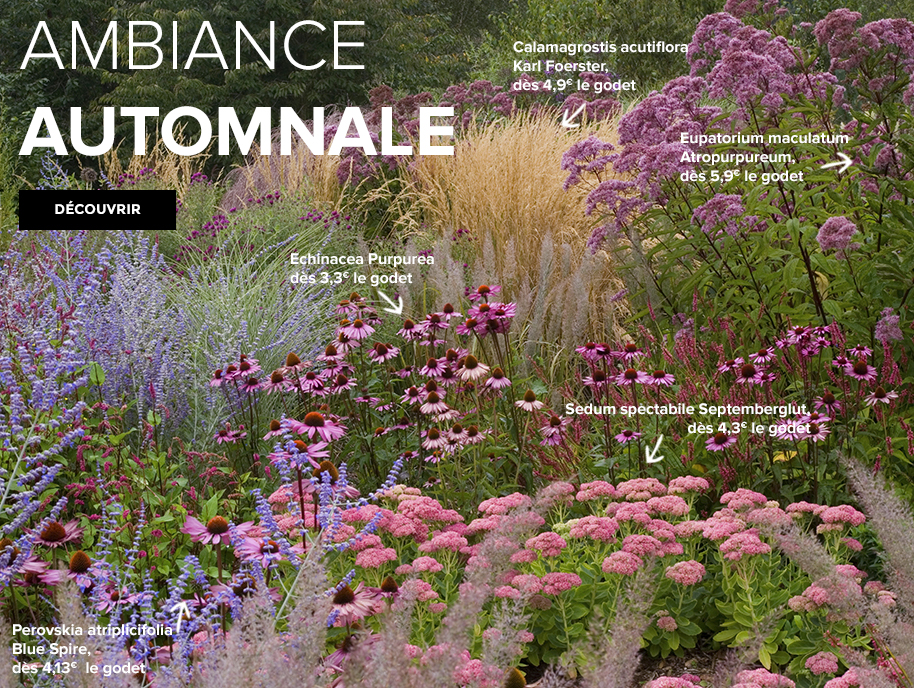 ambiance-automnale