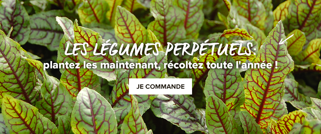 legumes-perpetuels