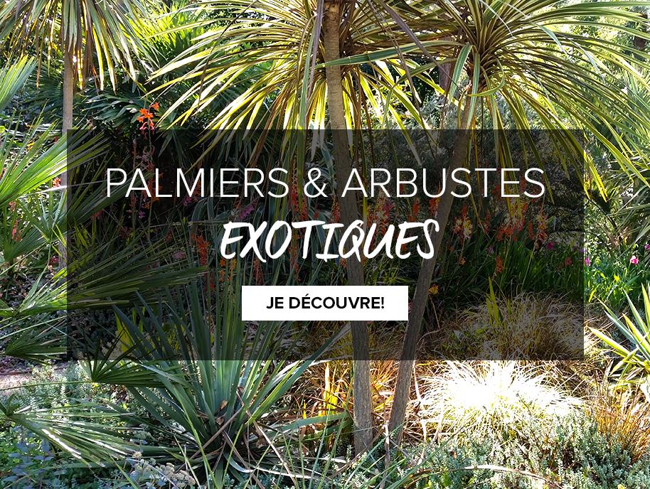 arbustes-exotiques