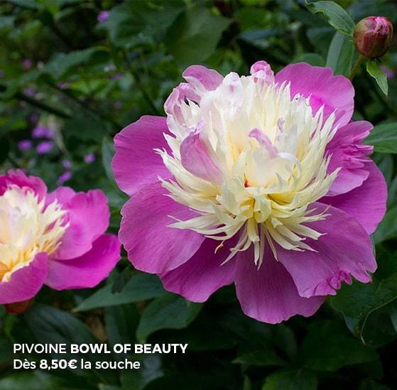plantes vivaces pour le jardin vivaces couvre sol vivaces d 39 ombre et de soleil. Black Bedroom Furniture Sets. Home Design Ideas