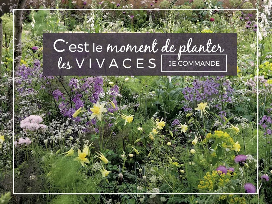 Promesse de fleurs plantes pour le jardin vivaces for Plantes grimpantes vivaces
