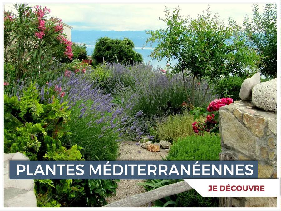 Promesse de fleurs plantes pour le jardin vivaces for Plantes et arbustes vivaces