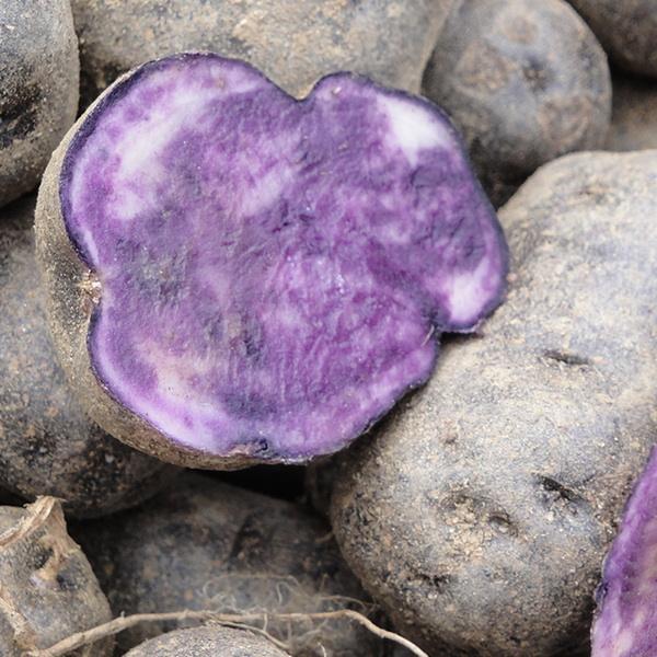 Planter la pomme de terre - Planter des pommes de terre ...