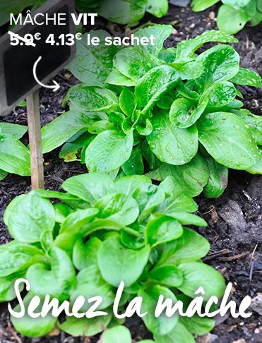 Cultiver son potager r ussir 3000 l gumes du jardin l - Repiquer de la mache ...