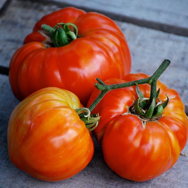 r ussir le semis des tomates. Black Bedroom Furniture Sets. Home Design Ideas