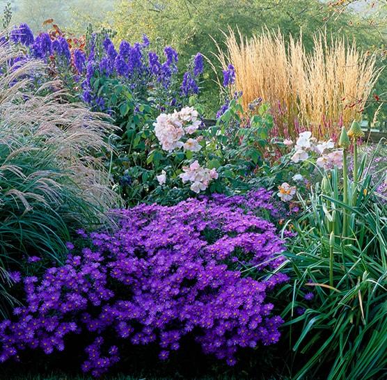 Plantes vivaces pour le jardin vivaces couvre sol for Catalogue de plantes vivaces