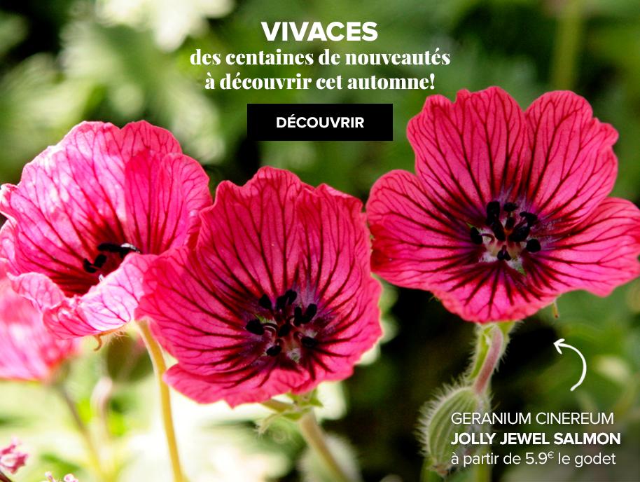 Promesse de fleurs plantes pour le jardin vivaces for Acheter des plantes en ligne