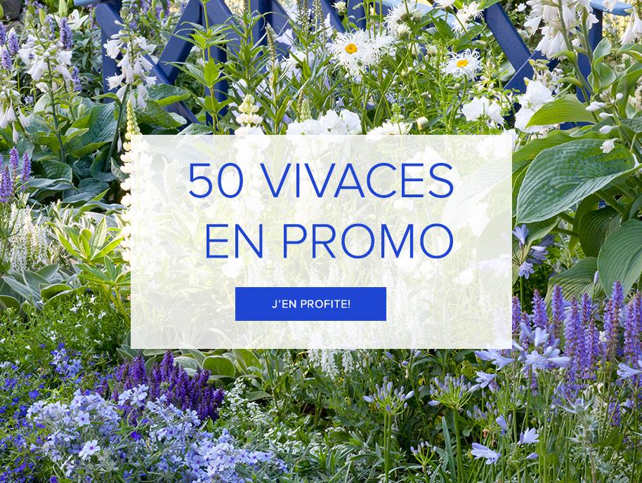 promotions-vivaces