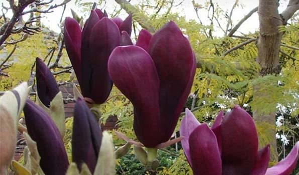 Arbustes à fleurs violettes