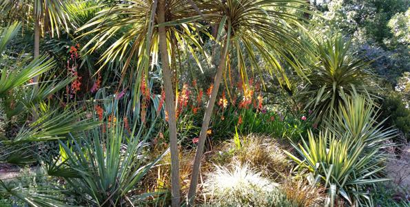 Arbustes exotiques