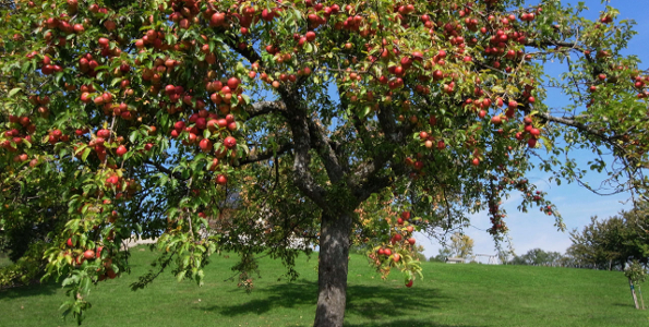 Fruitiers bio
