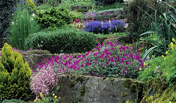 Géraniums vivaces pour rocailles