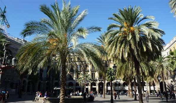 Palmiers de A à Z