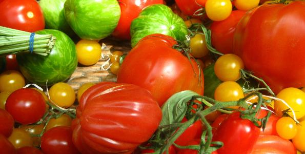 Plants de Tomates de A à Z
