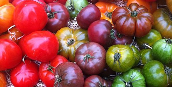 Graines de Tomates de A à Z