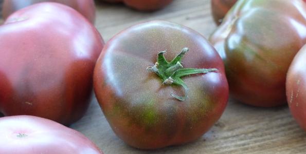 Tomates anciennes et de collection