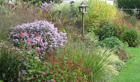 Plantes vivaces par couleur de fleur for Catalogue fleurs par correspondance