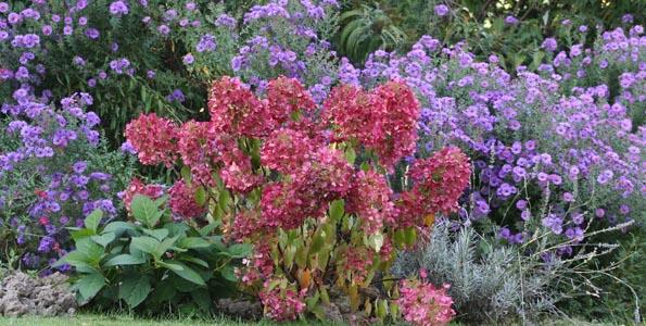 Arbustes par variété