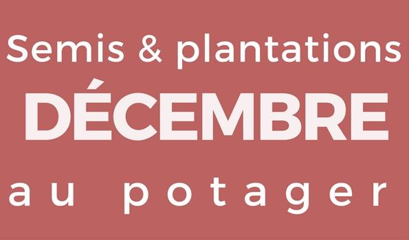 Semis et plantation en décembre