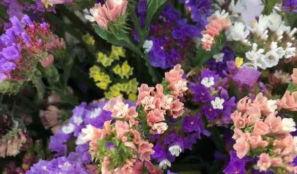 Graines de fleurs pour bouquets secs - Fleurs séchées