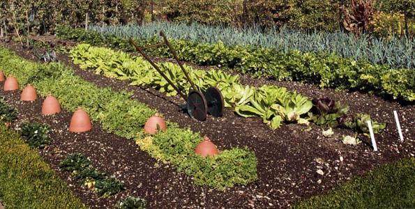 Jardin productif et vivrier