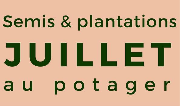 Semis et plantation en juillet