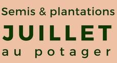 calendrier des semis et plantations mois par mois au potager l gumes planter et semer en. Black Bedroom Furniture Sets. Home Design Ideas