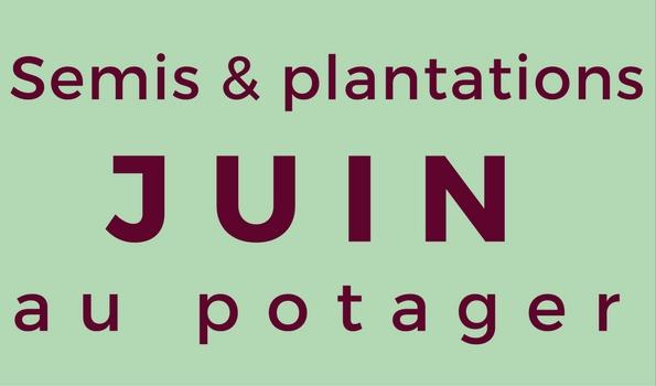 Semis et plantation en juin