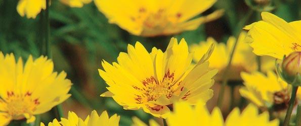 Graines de fleurs pour le soleil