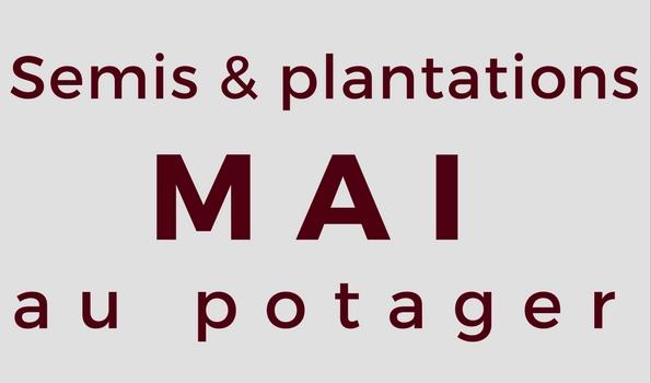 Semis et plantation en mai