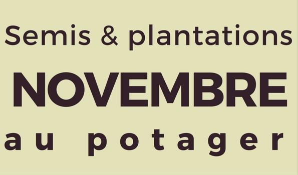 Semis et plantation en novembre