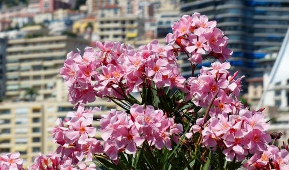 Plantes méditerranéennes en pot