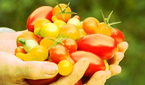 Tomates de A à Z