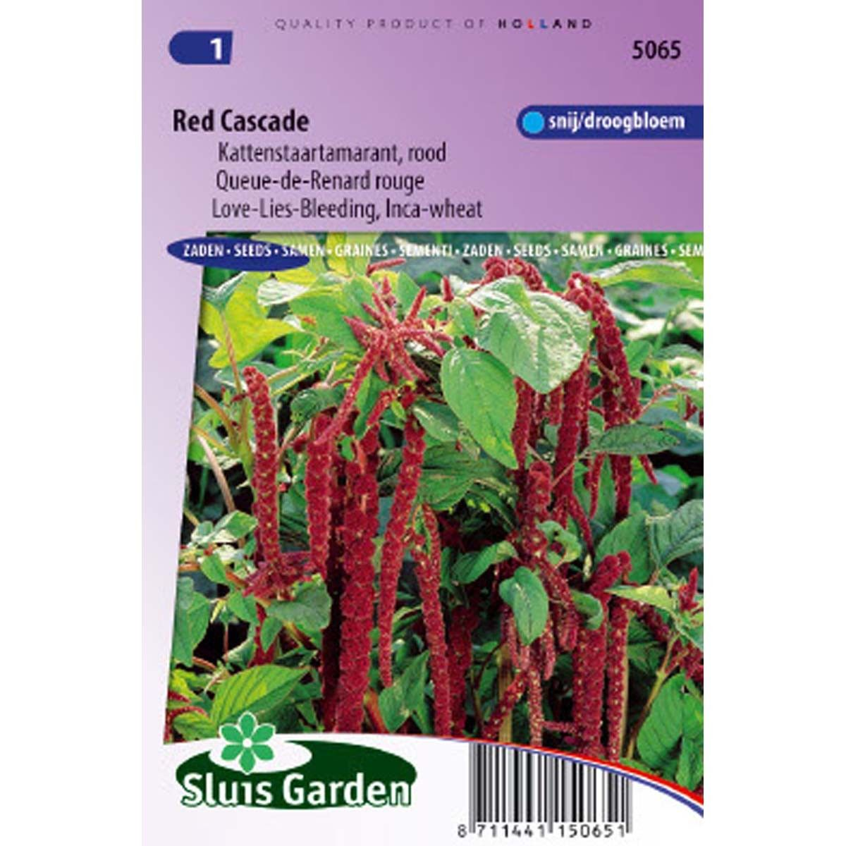 Amaranthus Red Cascade - Queue de Renard rouge
